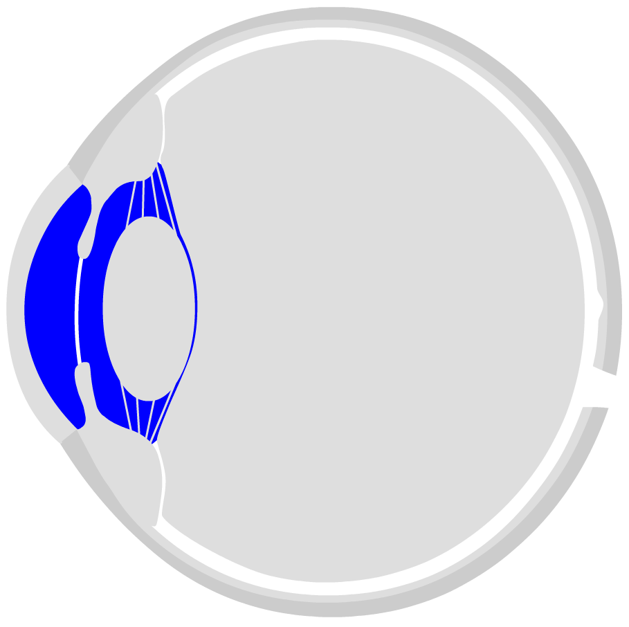 Human Eye Anatomy Structure And Function